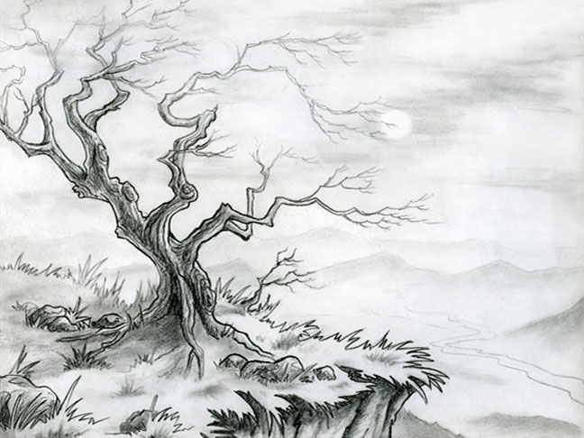 Tree – Pencil on Paper